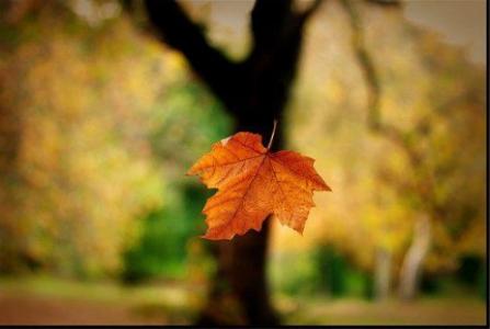 Frunză în cădere  din copac (cluj-am.ro)