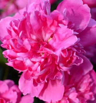 cropped-floare.jpg