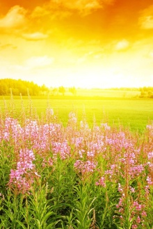 Flori, câmpie, peisaj (revistaartasicredinta.ro)